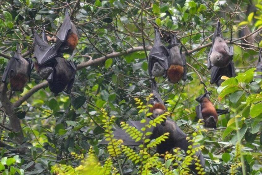 Langkawi Mangrove Kilim UNESCO Geopark and Cave Exploring Tour