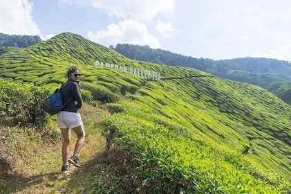 Shared Transfer : Taman Negara National Park (Kuala Tahan) to Cameron Highlands