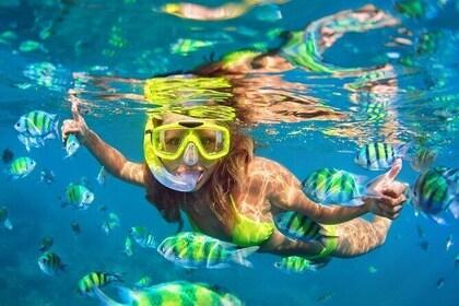 Premium Full Day Amazing Phi Phi Island Snorkeling Trip From Phuket