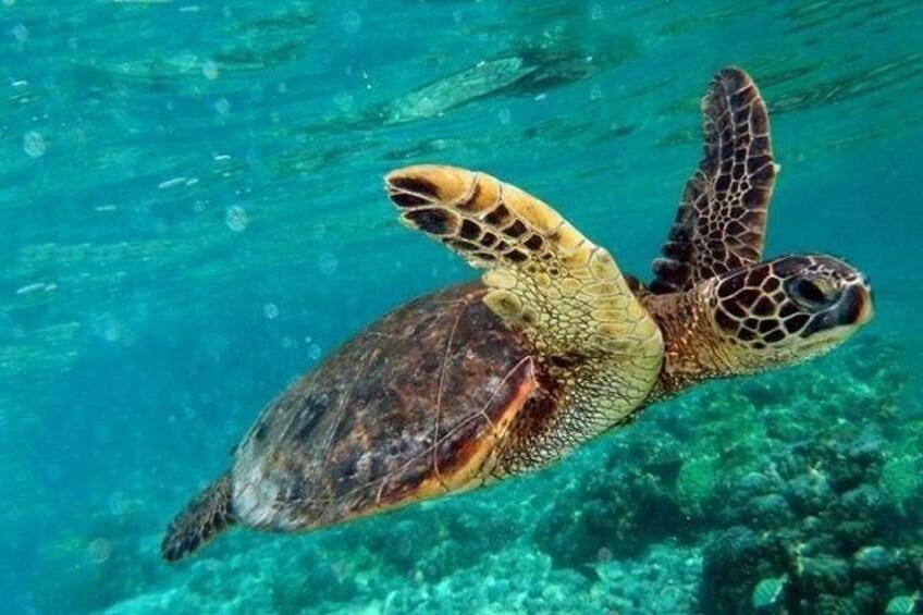 Show item 3 of 8. Marmaris Dalyan & Turtle Beach