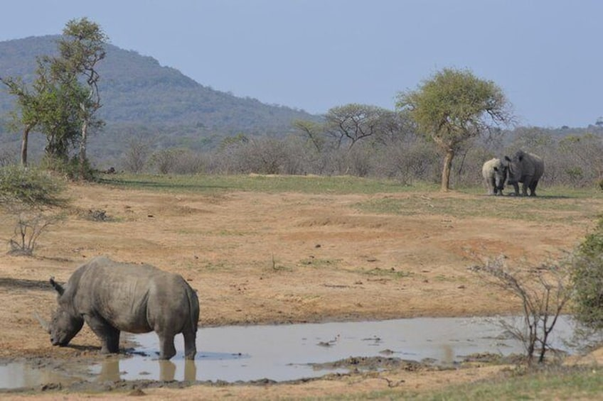 Show item 1 of 2. Hluhluwe Imfolozi Park Half-Day Game Drive from St. Lucia