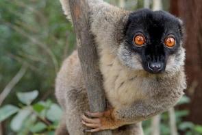 Lemur Day Tour at Andasibe Rainforest and Vakona Lodge Reserve