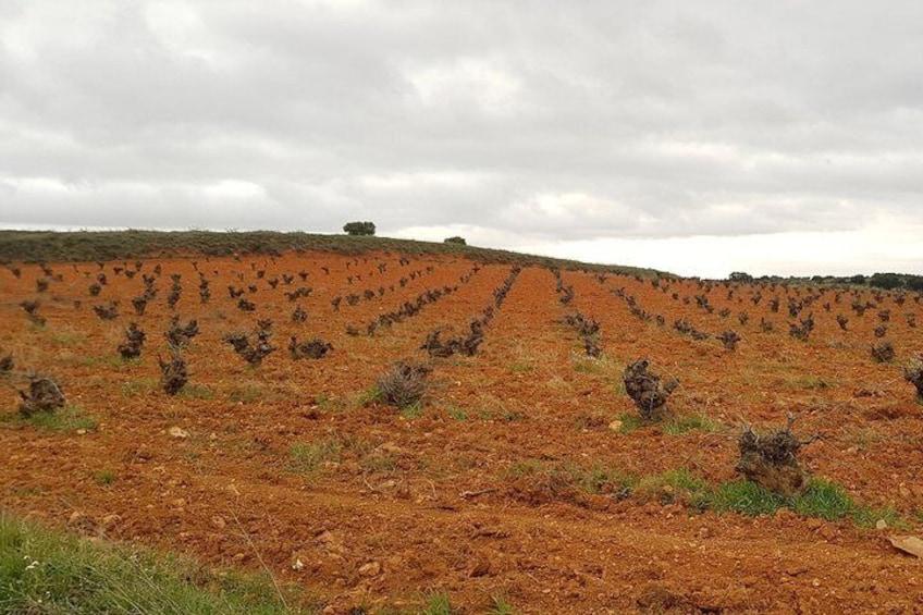 Madrid Vineyards
