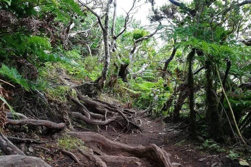 Lagoinha Hiking Trail