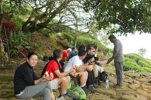 2,Days Trekking from Haputale to Ella Through Tea Plantation and Ella Rock,