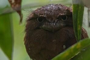 'Explore Sinharaja' rainforest - Bird Watching Tour (2-4 hours)