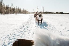 Reindeer Safari from Luosto