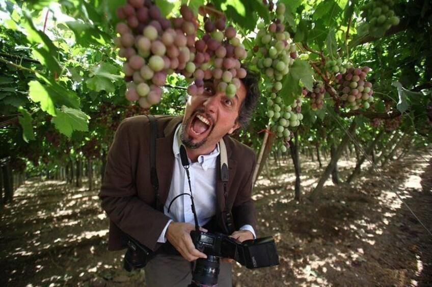 Show item 4 of 11. Seedless Grapes Farm Tour