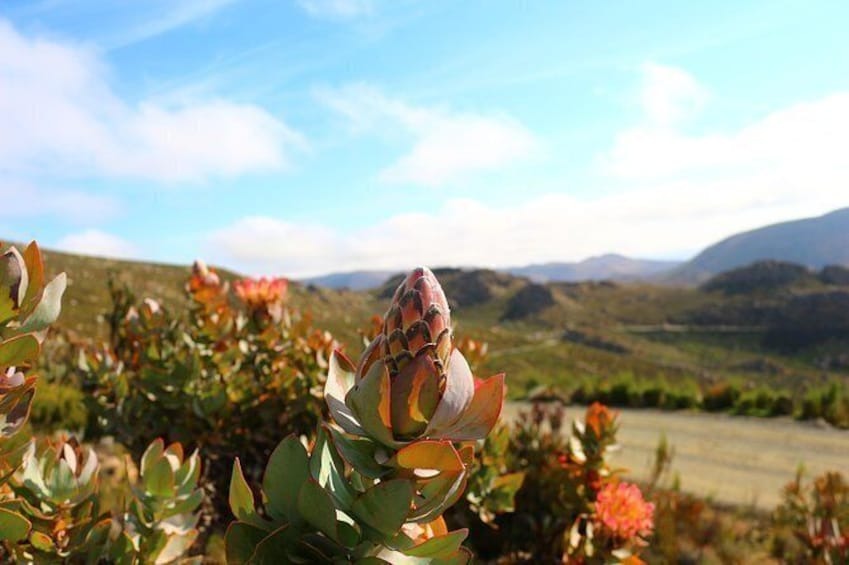 Show item 4 of 7. Swartberg Sunset Tour and Dinner
