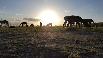 Yaya's Alpaca Farm Tour