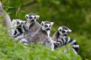 Full-Day Antananarivo, Ambohimanga and Lemurs Park Private Tour