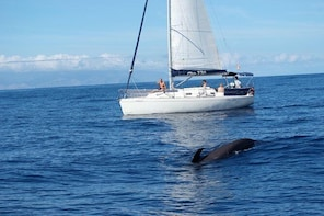 Whale and Dolphin Watching Sailing Boat with Drinks, Snacks and Swimming Ti...