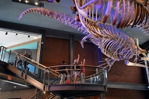Skip the Line: New Bedford Whaling Museum Admission Ticket