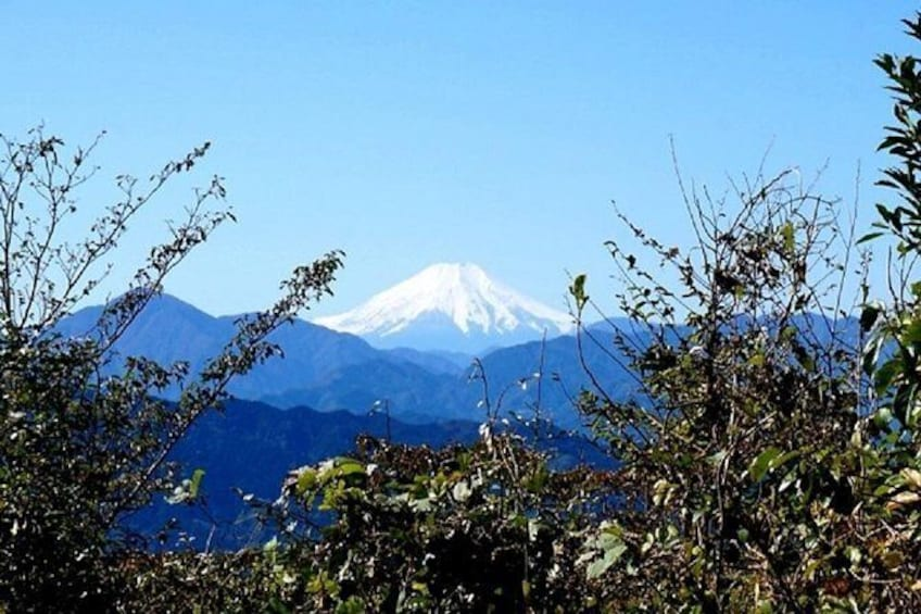 Zen food and hiking at Mt. Takao