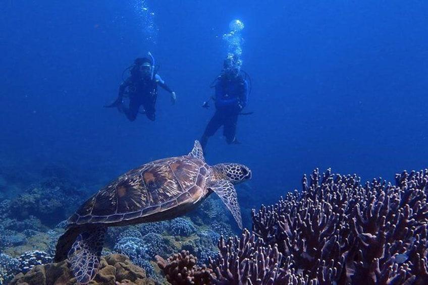 Show item 1 of 9. Guam's Best Beach Diving! - Beginner and Advanced Dives
