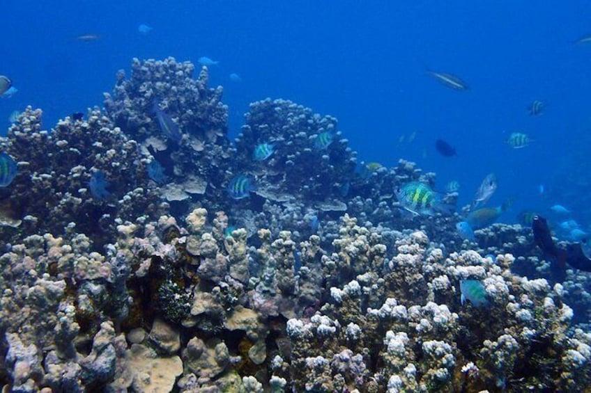 Show item 4 of 10. Guam's Best Beach Diving! - Beginner and Advanced Dives