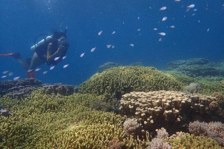 Show item 3 of 9. Guam's Best Beach Diving! - Beginner and Advanced Dives