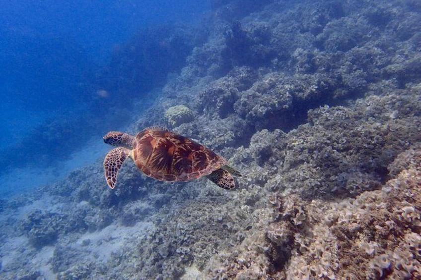Show item 2 of 10. Guam's Best Beach Diving! - Beginner and Advanced Dives