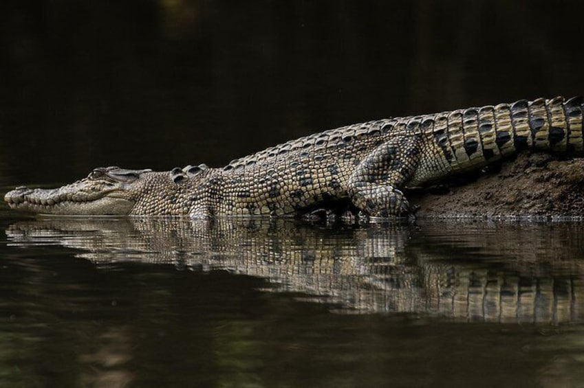 Solar Whisper Daintree River Crocodile and Wildlife Cruise