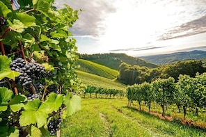 1-Day 'Classic Luxury Willamette Valley Wine Tour Experience'