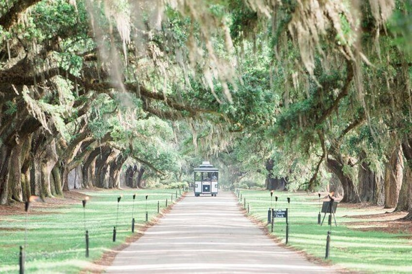 Show item 2 of 10. Boone Hall - All Tours Included For One Price