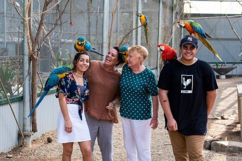 Get up close and personal with over 700 native & exotic birds in one of our 4 aviary's