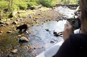 Wilderness & Wildlife Walking Tour - 2hrs