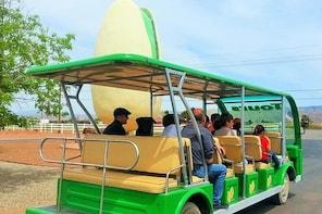 PistachioLand Farm Tour