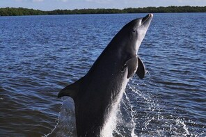 Dolphin and Wildlife Cruise in Fort Myers Beach