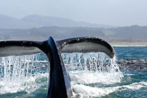 Whale Watching Day Cruise Santa Monica, Marina Del Rey and Palos Verdes Bay