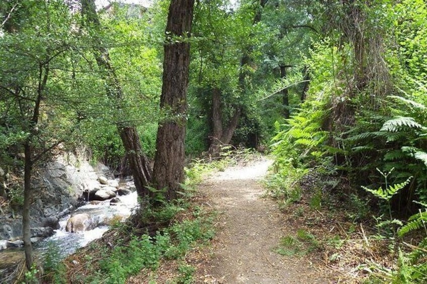 Show item 5 of 6. A short walk next to the stream at Kakopetria village