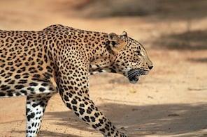 Private Tour: Wilpattu National Park Safari