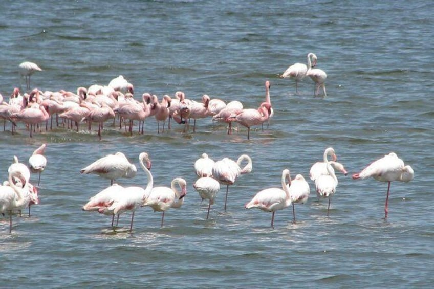 Show item 5 of 9. Flamingos en route to Cape Cross