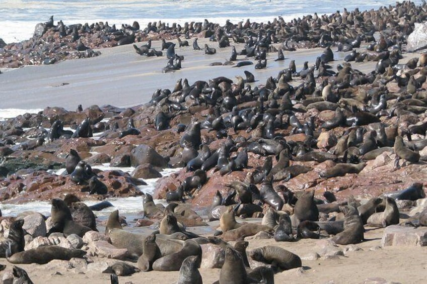 Show item 1 of 9. Cape Cross Seal Colony Tour from Swakopmund, Namibia