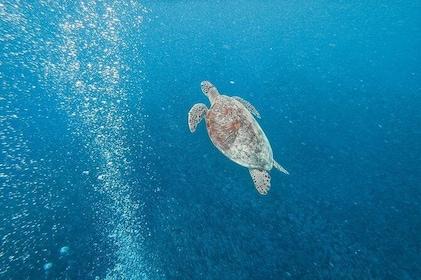 Pescador Island hopping, turtles, sardines and Kawasan Falls