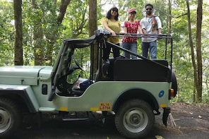 Tea Estates and Waterfall Exploration in a Jeep in Kerala - A Guided Tour
