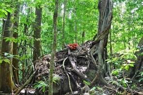 Day-Trip to Gunung Gading Rafflesia Centre from Kuching City