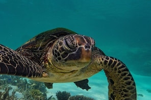 Half Day Turtle Tour on the Ningaloo Reef, Exmouth