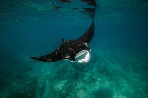 Ningaloo Reef or Muiron Islands Snorkelling and Wildlife Adventure