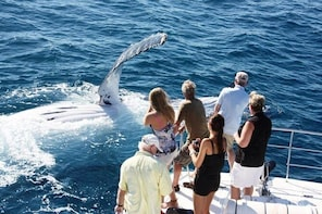 Whale Watching Sunset Cruise from Broome