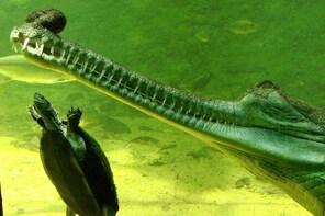 1-hour Crocodile Night Safari in Mahabalipuram