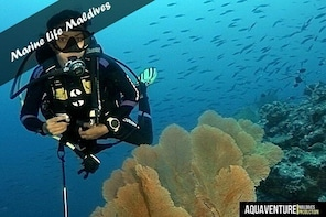 Diving package for certified scuba divers - 5 boat dives (incl. equipment)