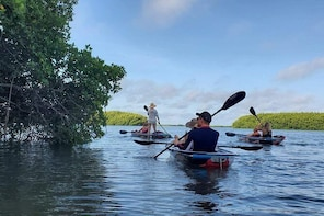 Clear Kayak Tour of Shell Key Preserve | Tampa Bay Area