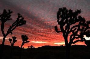 Sunset Joshua Tree Hike with Dinner and Night Sky Presentation
