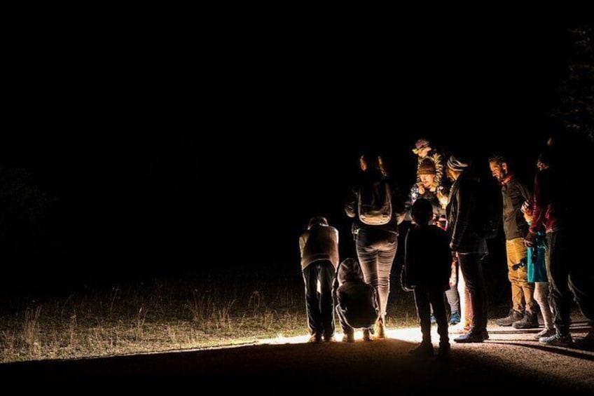 Twilight Tour