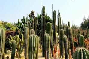 Flexible Xiamen Private Half Day Tour to Experience Xiamen Botanical Garden