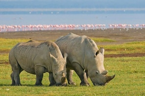 4 Days Maasai Mara Lake Nakuru Safari