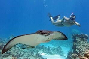 West Nusa Penida Snorkeling Trip from Bali