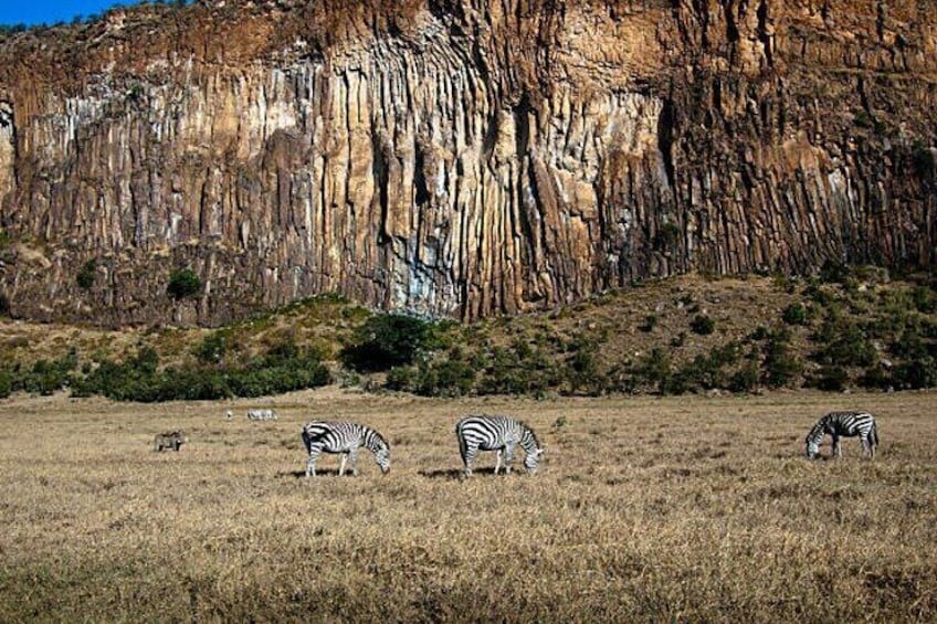 Zebras at the Hell's Gate National Park