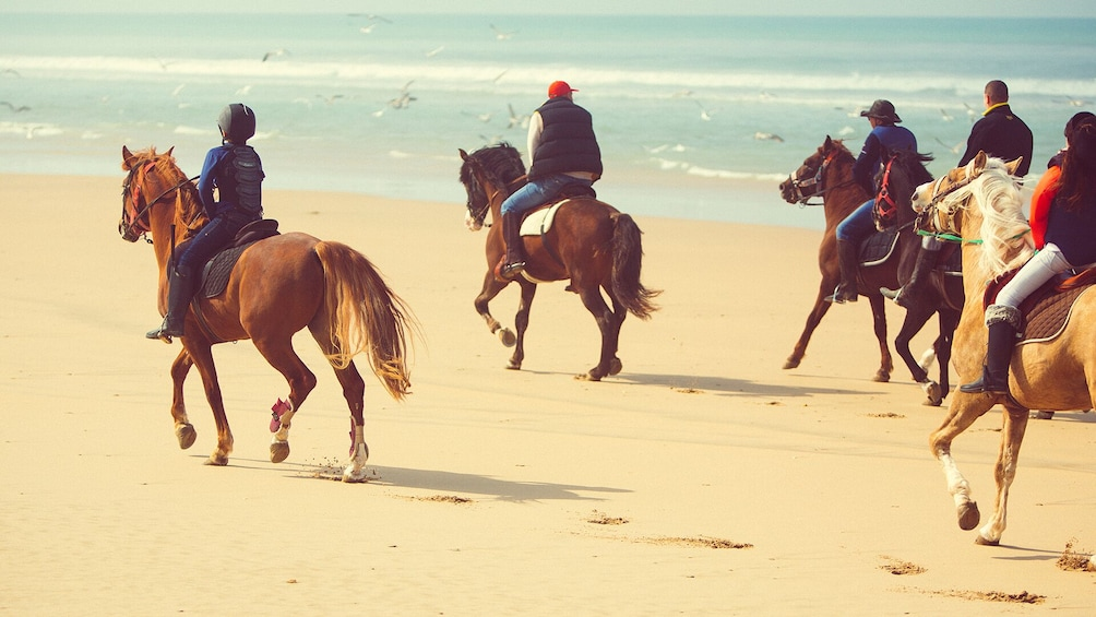 Show item 1 of 10. Horseback Riding: PLAYA BLANCA - Tangier - 1 hour